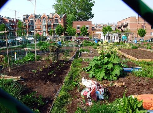 Urban Agriculture - Detroit